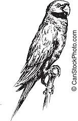 hand drawn macaw bird