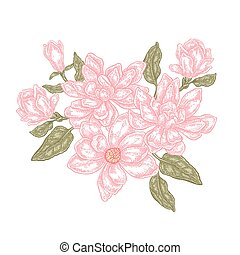 Hand drawn magnolia flowers isolated on white background. Vintage floral composition. Vector illustration