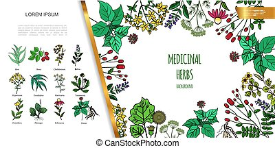 Hand Drawn Medicinal Herbs Colorful Concept