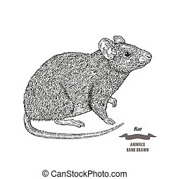 Hand drawn mouse or rat animal. Black ink sketch on white...