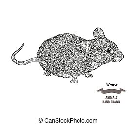 Hand drawn mouse or rat animal. Black ink sketch on white background. Vector illustration engraving style.
