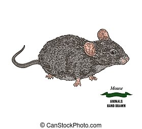 Hand drawn mouse or rat animal. Colored sketch on white background. Vector illustration vintage.