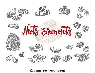 Hand Drawn Nuts Elements Set