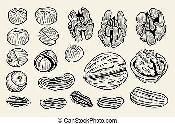 hand drawn nuts.