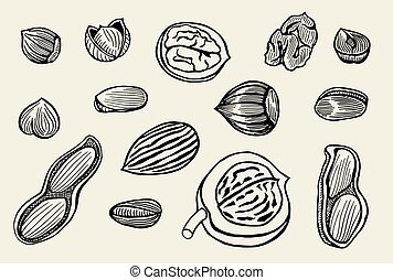 hand drawn nuts set