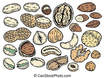 Hand drawn Nuts set