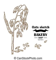 Hand drawn oats. Bakery vector illustration
