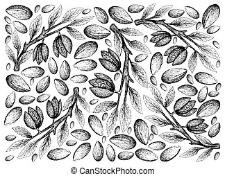 Hand Drawn of Argan Seeds and Almonds Background -...