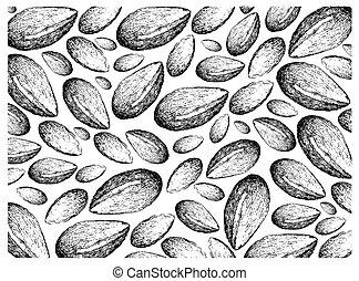 Hand Drawn of Argan Seeds on White Background - Illustration...