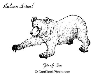Hand Drawn of Autumn Grizzly Bear on White Background