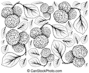 Hand Drawn of Chinese Mulberries on White Background