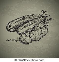 Hand drawn of cucumbers