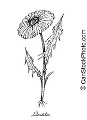 Hand Drawn of Dandelion Plants on White Background