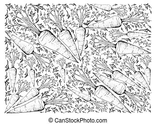 Hand Drawn of Fresh Carrot on White Background
