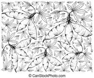 Hand Drawn of Fresh Cassava Root on White Background