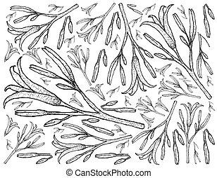 Hand Drawn of Fresh Daylily Plants Background
