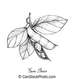 Hand Drawn of Fresh Green Fava Bean - Vegetable,...