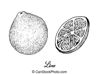 Hand Drawn of Fresh Limes on White Background