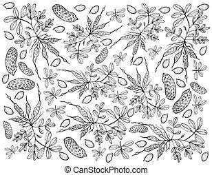 Hand Drawn of Fresh Peanuts Plants Background