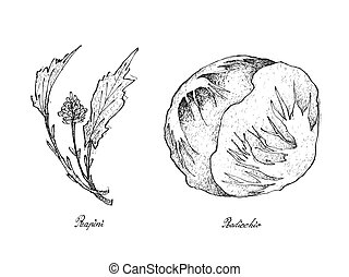 Hand Drawn of Fresh Rapini and Radicchio - Vegetable Salad,...