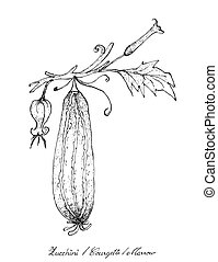 Hand Drawn of Fresh Zucchini Fruits with Flowers - Vegetable...