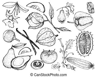 Hand Drawn of Gourd and Squash Fruits - Vegetable and Herb,...
