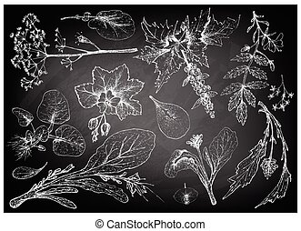 Hand Drawn of Leafy and Salad Vegetable - Vegetable Salad,...