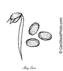 Hand Drawn of Mung Beans and Bean Sprout