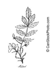 Hand Drawn of Mustard on White Background - Vegetable Salad,...