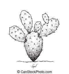 Hand Drawn of Nopal Cactus on White Background - Stem...