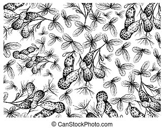 Hand Drawn of Peanuts Plant With Groundnuts Background -...
