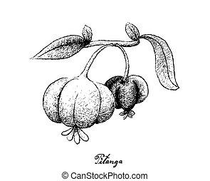 Hand Drawn of Pitanga Fruits on White Background - Berry...
