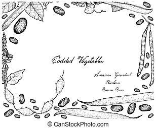 Hand Drawn of Podded Vegetables Frame on White Background