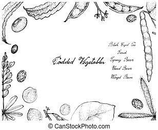 Hand Drawn of Podded Vegetables Frame on White Background