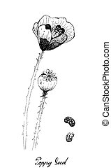 Hand Drawn of Poppy Flower with Pod and Seed - Illustration ...