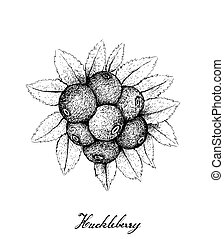 Hand Drawn of Ripe Huckleberries on White Background