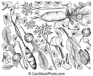 Hand Drawn of Root and Tuberous Vegetables Background - Root...