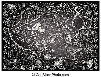 Root and Tuberous Vegetables, Illustration Hand Drawn Sketch of Water Caltrop, Turmeric, Sweet Potato, Cassava, Burdock and Ahipa Plants on Black Chalkboard.