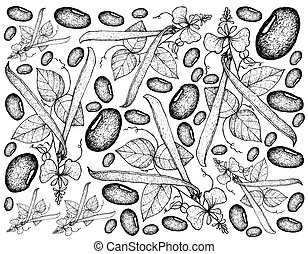 Hand Drawn of Runner Bean Plants Background