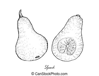 Hand Drawn of Squash on A White Background