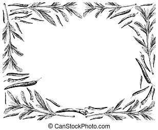 Hand Drawn of Summer Savory with Chili Peppers Frame - ...