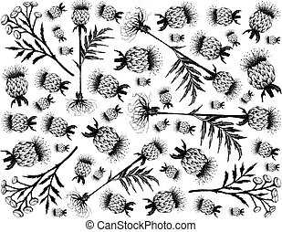 Herbal Flower and Plant, Hand Drawn Background of Tanacetum Vulgare, Tansy, Cow Bitter or Golden Buttons Flowers and Rhaponticum Carthamoides or Maral Root Plant, Used in Alternative and Folk Medicine.