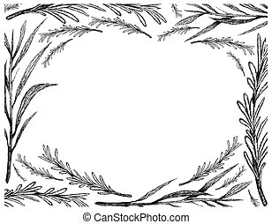 Hand Drawn of Tarragon and Rosemary Frame - Herbal Plants, ...
