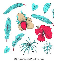 Hand drawn of tropical plants and flower