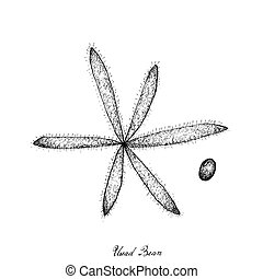Hand Drawn of Uread Bean Pods on White Background -...