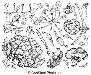 Hand Drawn of Various Vegetables on A White Background