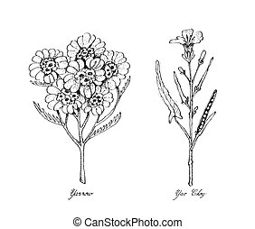 Hand Drawn of Yarrow and Yao Choy - Sketch Delicious Fresh...