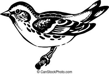 hand-drawn, oiseau, siskin, illustration