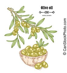 Hand drawn olive branch in sketch style. Vector illustration isolated on white background. Olive oil design elements