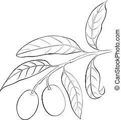 Hand drawn olive branch.